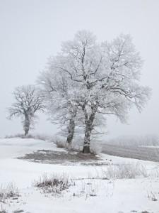 Winterlandschaft an der Ostsee