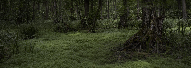 Dieser Wald befindet sich glücklicherweise auf dem Planeten ...